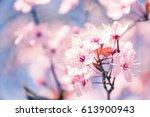 Spring Tree Branch In Blossom ...
