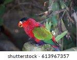 parrot in tenerife   Shutterstock . vector #613967357