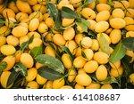 Marian Plum Pile Or Plum Mango...