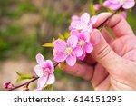 Farmer Hand Holding Peach...