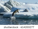 crabeater seals jump on the ice. | Shutterstock . vector #614203277