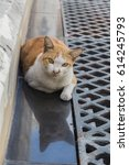 white and  orange cat looking... | Shutterstock . vector #614245793