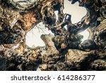 inside of a tree open after... | Shutterstock . vector #614286377