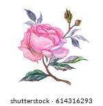 pink rose with buds  watercolor ... | Shutterstock . vector #614316293