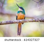 Small photo of Rufous tailed jacamar looking left