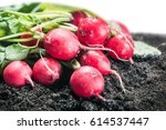 harvested radish isolated on... | Shutterstock . vector #614537447