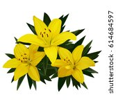 Three Yellow Lilies With Green...