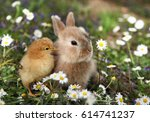 bunny rabbit and chick are best ... | Shutterstock . vector #614741237