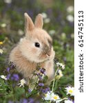 Cute Bunny Rabbit In Colorful...