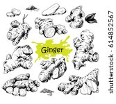 vector hand drawn ginger set.... | Shutterstock .eps vector #614852567
