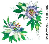 Vector Tropical Blue Passiflor...