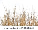 Dry Grass  Isolated On White...