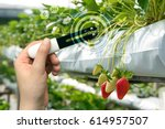 smart agriculture  sensor... | Shutterstock . vector #614957507