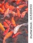 fancy carps fish. koi carp fish ...   Shutterstock . vector #615203453