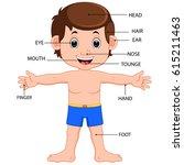 vector illustration of boy body ... | Shutterstock .eps vector #615211463