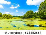 Summer Algae Pond Landscape