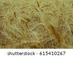 background of golden ears of... | Shutterstock . vector #615410267