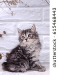 Stock photo small kitten sits on a white brick wall background and dried flowers 615468443