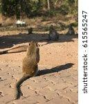 monkey at thailand. | Shutterstock . vector #615565247