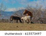 A Horse And Donkeys At Feeding...