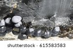 Small photo of Marine molluscs clinging to rock in intertidal zone