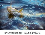 Spinning Fishing  Lure Fishing...