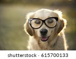 portrait of a golden retriever... | Shutterstock . vector #615700133