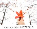 bombax ceiba flower in hand... | Shutterstock . vector #615792413