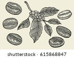 coffee branch. plant with leaf  ... | Shutterstock .eps vector #615868847
