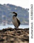 Small photo of African Darter bird in Majorca