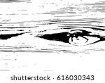 wooden grain vector texture... | Shutterstock .eps vector #616030343
