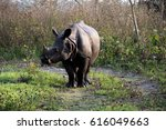 Small photo of A one-horned Rhino inside Manas National Park of Assam, Northeast India.