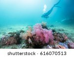 Scuba Diver Swim In Colorful...