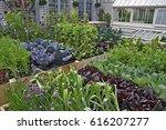 a kitchen garden in an urban... | Shutterstock . vector #616207277