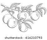 Peach Fruit Graphic Branch...