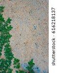 sand and green grass   Shutterstock . vector #616218137