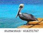 pelican standing on brown... | Shutterstock . vector #616251767