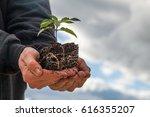 Farmer Holding A Cannabis Plan...