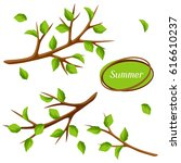 summer set with branches of... | Shutterstock .eps vector #616610237