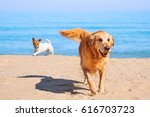 Two Dogs Golden Retriever And...
