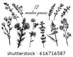 drawing set of 10 field grasses ... | Shutterstock .eps vector #616716587