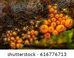 Group Of Hairy Fungi In...