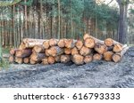 wood cut in the forest. cut... | Shutterstock . vector #616793333