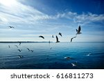 Seagulls Over Calm Sea