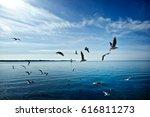Seagulls Over Calm Sea