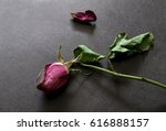 Dried Rose And Falling Petal O...