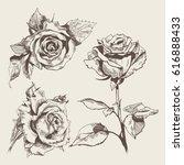 vector stock hand drawn rose... | Shutterstock .eps vector #616888433