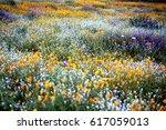 Stock photo flower poppy flower wild flower 617059013