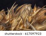 closeup detail of chicken...   Shutterstock . vector #617097923