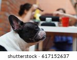 french bulldog at home for the... | Shutterstock . vector #617152637